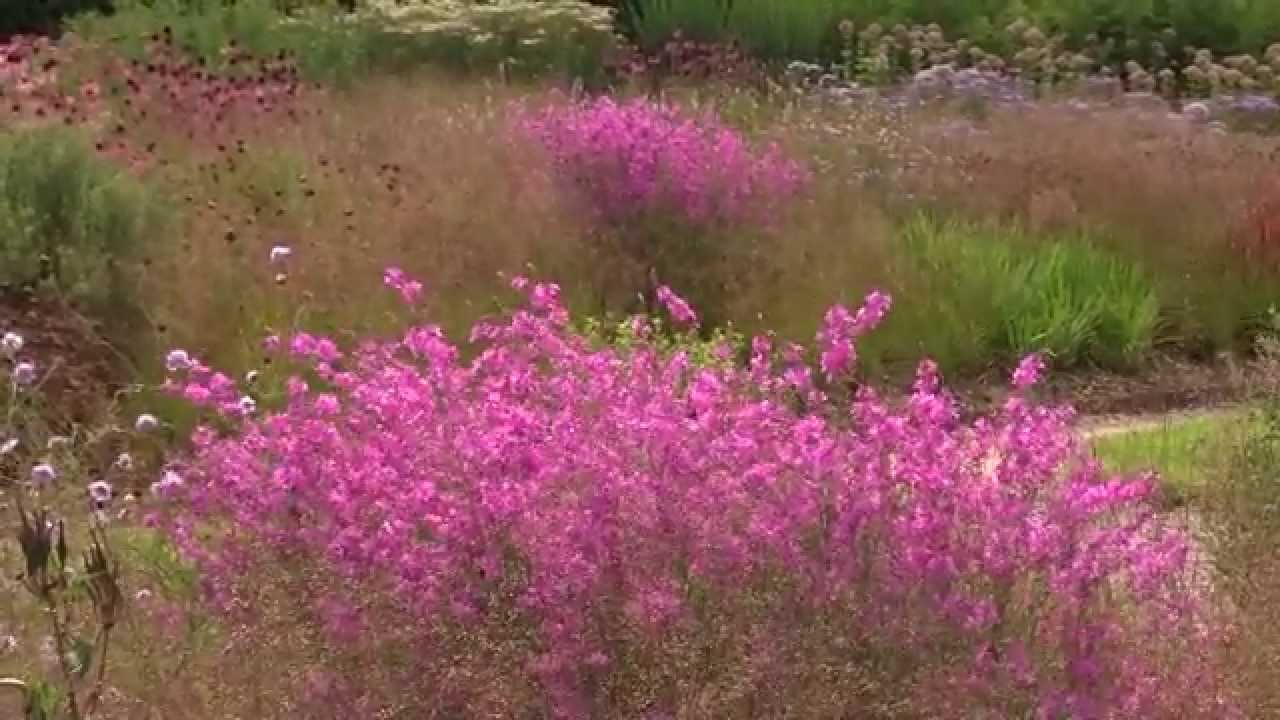 Oudolf perennial meadow in somerset for Piet oudolf fall winter spring summer fall