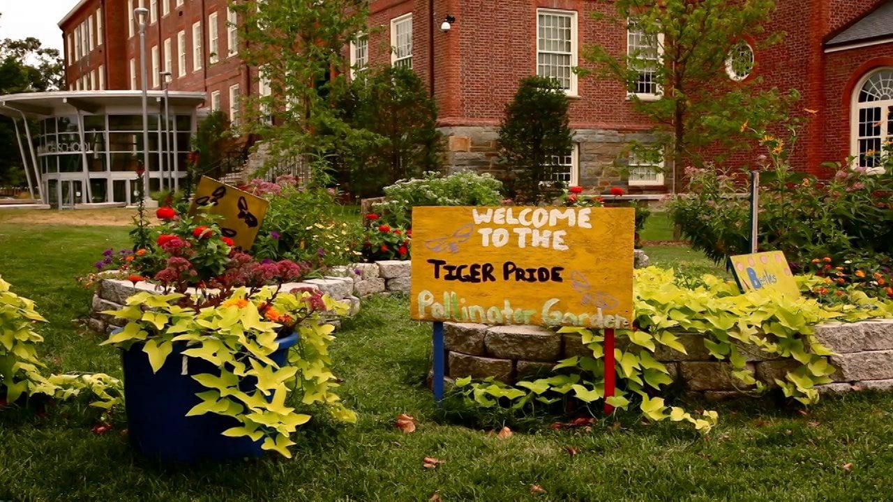 Video Category Community Gardens